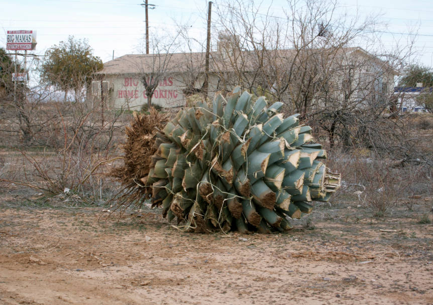 Artichoke - The Pictures We Took - Aguila in Photographs - Arizona