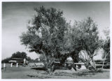 Photograph of a roadside rest area on the Pinal Pioneer Parkway in Pinal County (Ariz.)