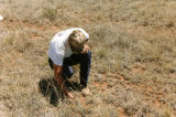 Photograph/color image of Rukin Jelks checking condition of the grass on the Triangle M Ranch in...