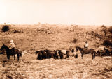 Photograph of cowboys working on the Babbit Bros. Ranch in Coconino County (Ariz.)