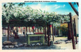 Photograph/colorized postcard of the rose tree, a tourist attraction in Tombstone (Ariz.)