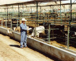 Photograph of Donnie Drake, an animal control officer, inspecting cattle.