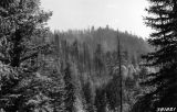 Photograph of fire damage in the Carson National Forest  in Taos (N.M.)