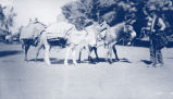 Photograph/cyanotype of a man pulling three laden mules in Glendale (Ariz.)