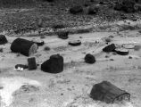 Photograph of petrified trees at the Petrified Forest National Park in Navajo County (Ariz.)