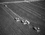 Photograph of tractors plowing fields in Arizona.