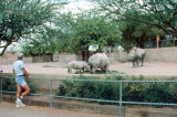 Photograph of the Phoenix (Ariz.) Zoo.