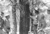 Photograph of Boy Scouts learning forestry and botany - the stump was burned 35 years ago at...