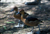 Photograph of birds at the Phoenix (Ariz.) Zoo.