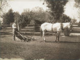 Photograph of Arizona Governor George W.P. Hunt and a horse mowing the grounds at the Arizona...