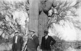 Photograph of  (left to right) H.R. Stephens, Governor George W. P. Hunt and L.A. Cain in Arizona.