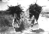 Photograph of several native American women carrying sticks of wood on their heads.