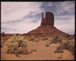 The Mitten Butte at Springtime - Monument Valley, Arizona. Against the creamy-white blossoms of...
