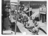 Mule Train on Main