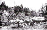 Photograph of Logging by Horses