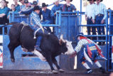 Bull Riding in the Parada del Sol Rodeo 1995.