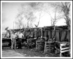 Shearing Plant on Ranch at Palo Verde, ca. 1930.